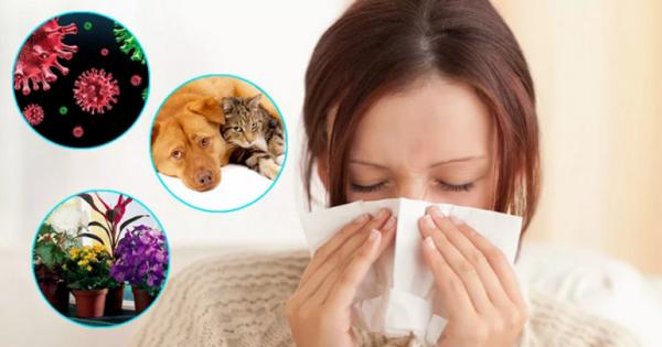 Анти аллергическая программа